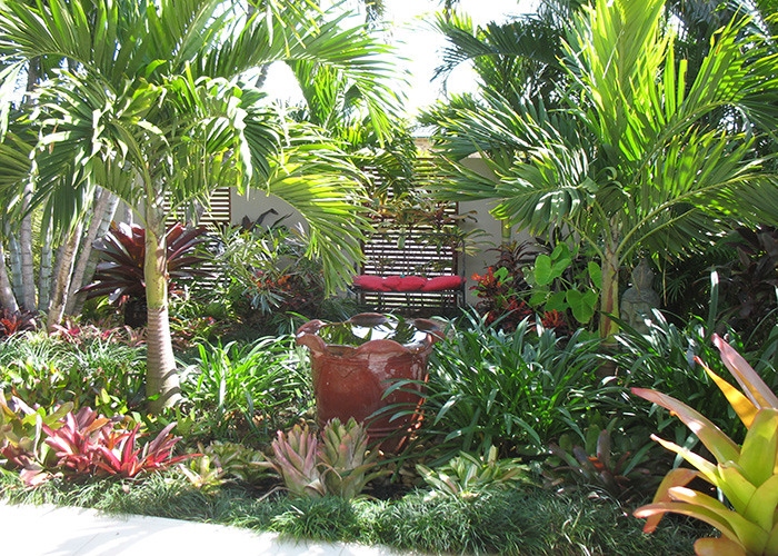 Palms for brisbane bribie island garden for Garden design queensland