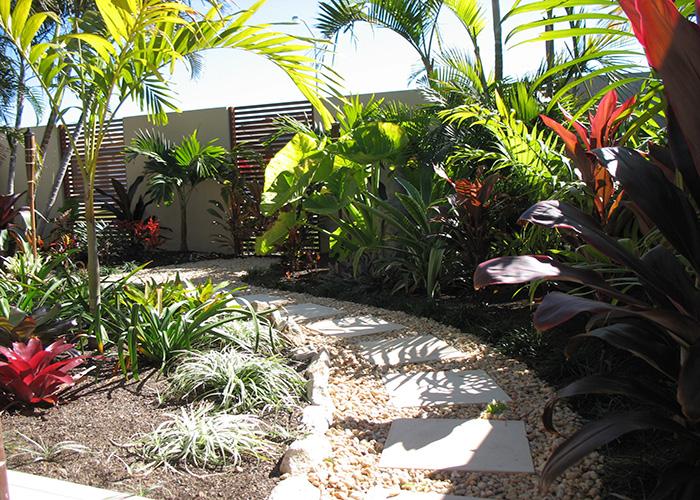 Palms for brisbane bribie island garden for Garden ideas brisbane