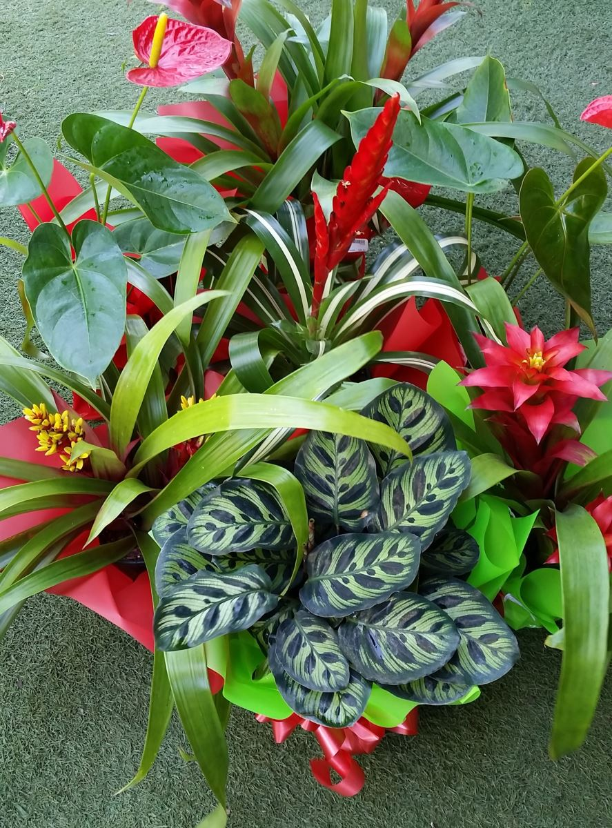 free gift wrapping on you plant purchase brisbane office plants